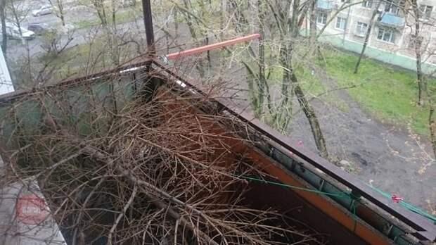 Отличная идея для тех, кто не выкинул ёлочку. Не выкидывайте, ведь для этого и существует балкон балкон, балконы, на балконе, прикол, че за хрень на балконе?, юмор