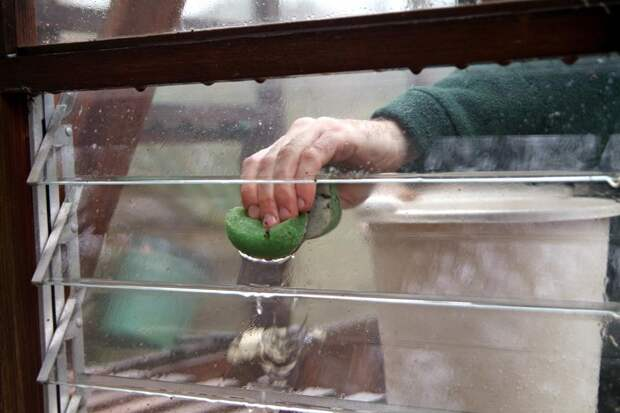 Мытье стеклянной теплицы
