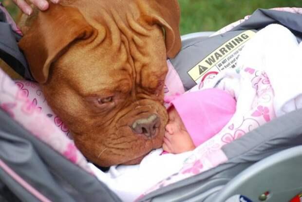Родители оставили младенца с собакой. Вернувшись, они обнаружили ЭТО!