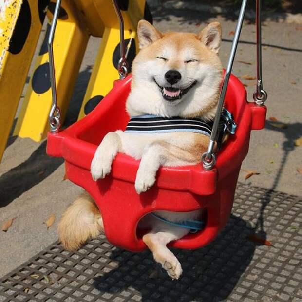 Смешные снимки собак, которые дарят позитив