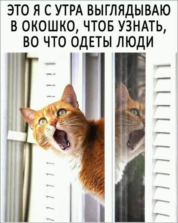 Возможно, это изображение (один или несколько человек, кот и текст «это я с утра выглядываю B окошко, чтоб узнать, во что одеты люди 100S»)