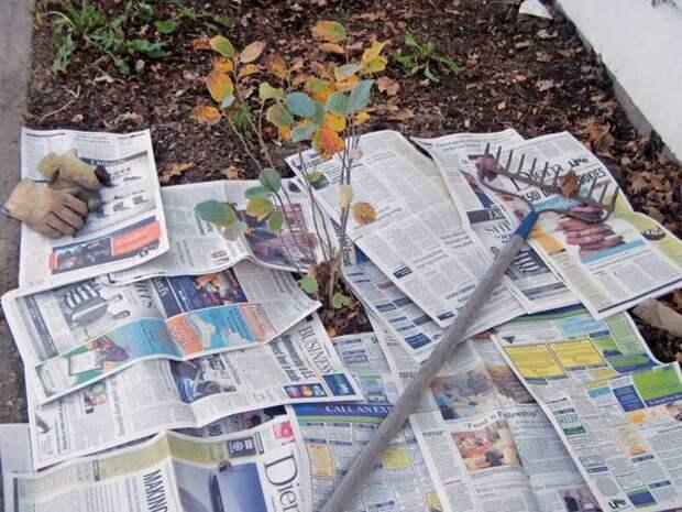 Нестандартные способы использования газет на даче