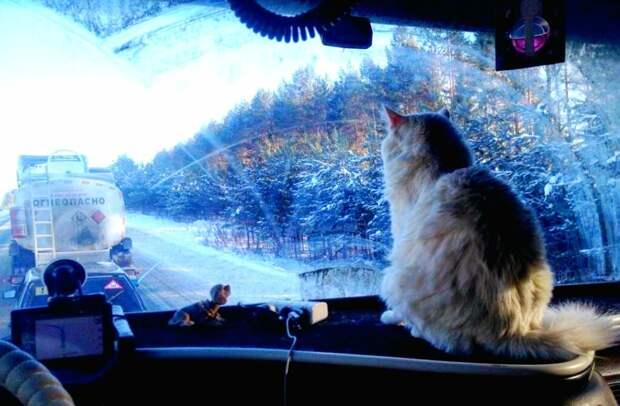 Мужчина постеснялся фотографироваться, поэтому я полезла за иллюстрациями в интернет. Оказалось, что достаточное количество дальнобойщиков возит с собой в кабине кошек! На фото - кот Барсик, пермского водителя Эдуарда Ерошенкова. Фото с сайта v-kurse.ru, обработано автором