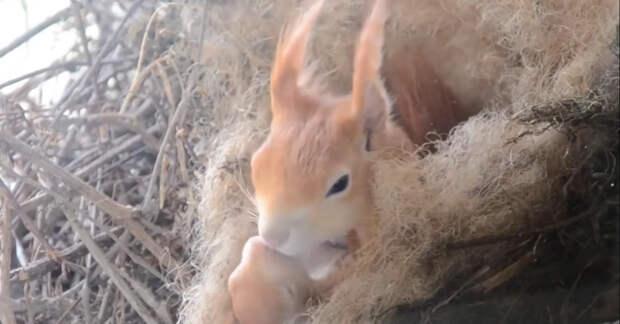 Как же ему повезло, за его окном белка построила гнездо и привела бельчат. Теперь вместо телевизора он пропадает у окна