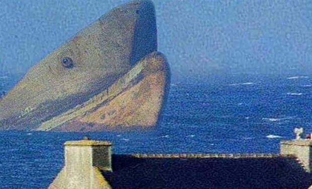 Ученые ищут в океане следы мегалодона