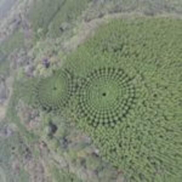 Экспериментальный лес в Японии, высаженный в 1973 году