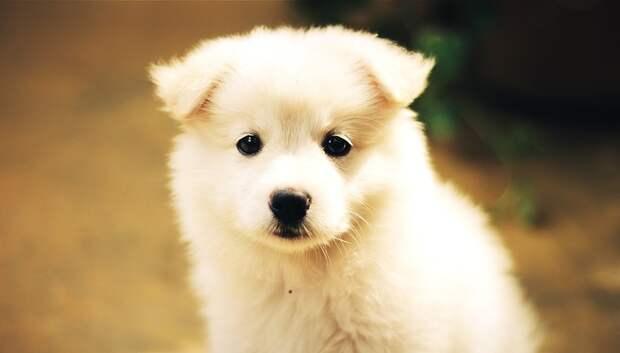 Жительница Подольска стала жертвой мошенницы при покупке собаки