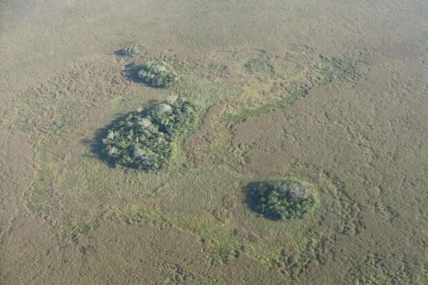 В районе Амазонки искусственные острова начали строить ещё 10 тыс. лет назад