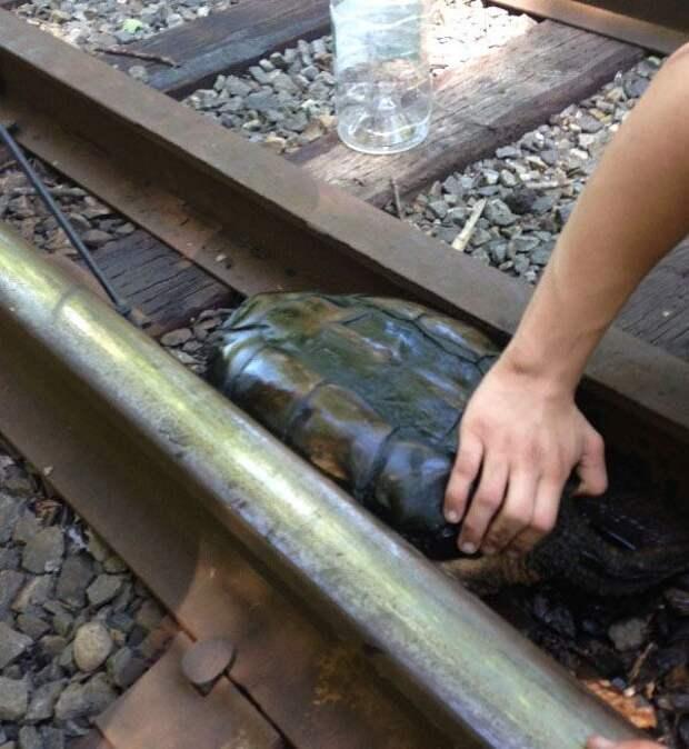 Фотоотчет о спасении черепахи спасении, фотоотчет, черепаха