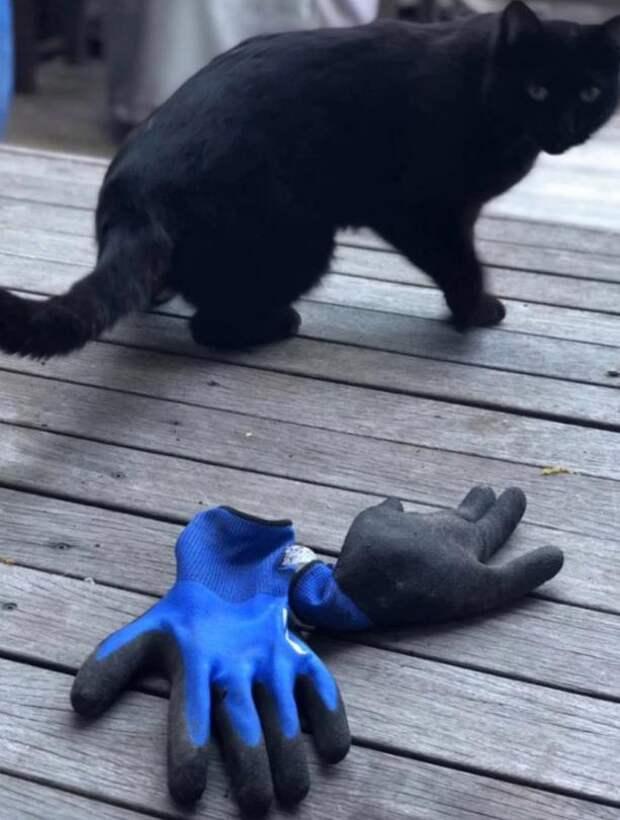 «Моя кошка – клептоманка. Забирайте свое.» написала хозяйка