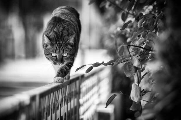 monorail_cats_photos_sabrina_boem_15.jpg