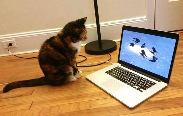 кошка перед ноутбуком