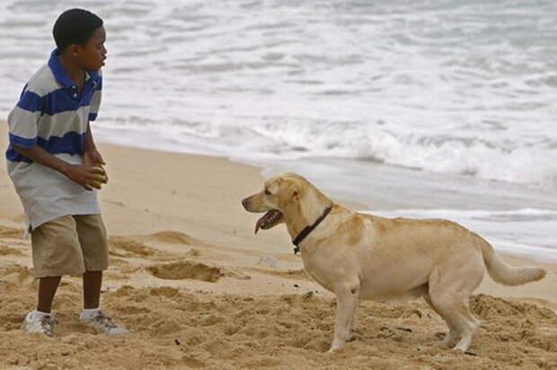 Лабрадора Винсента, также спасшегося на таинственном острове, сыграла собака по кличке Мэдисон