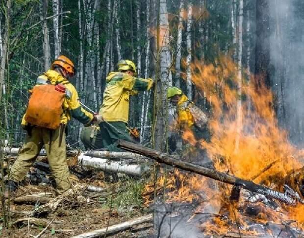 Сгоревшие леса в Сибири и российская оппозиция что между ними общего?