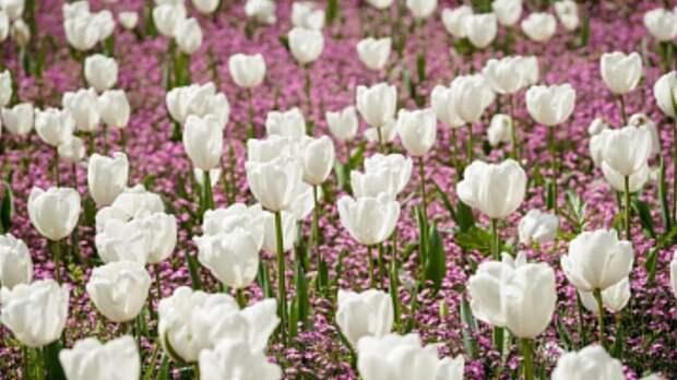 Власти Петербурга проработают вопрос о создании садов непрерывного цветения