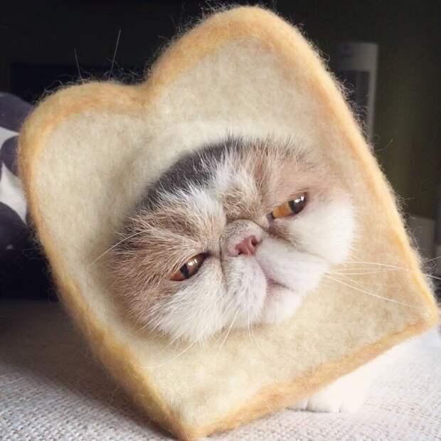 Буона — очаровательная японская кошка с безупречным чувством стиля Буона, Стиль, домашние питомцы, животные, кошка, милота