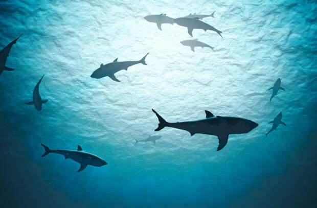 У рифовых акул обнаружили загадочную кожную болезнь