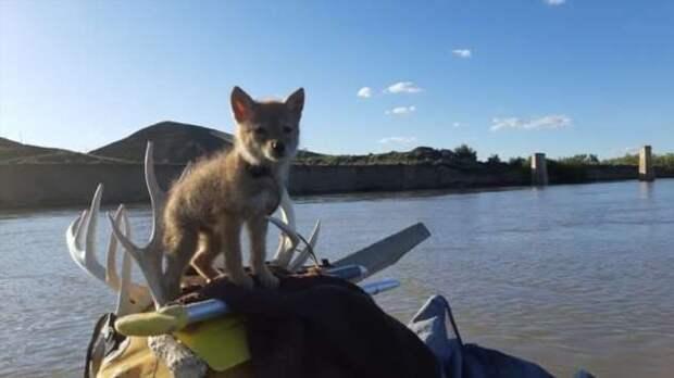 Мужчина спас молодого койота и 10 дней сплавлялся с ним на плоту