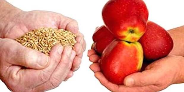 жменя крупы и яблоки в руке
