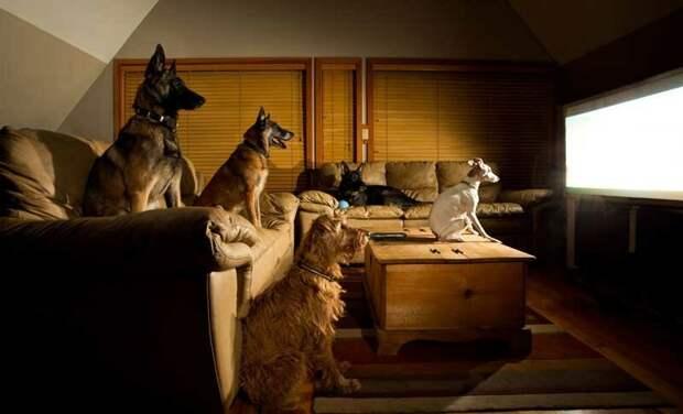 Что видят домашние животные, когда смотрят телевизор?