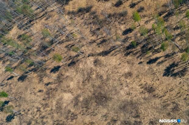 У нас осталась куча фотографий Омской области с самолета. Мы решили показать их вам