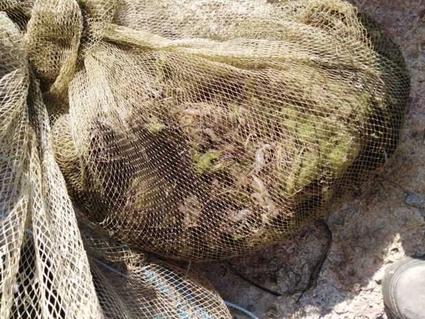 Крымчанина могут судить за незаконную ловлю креветок