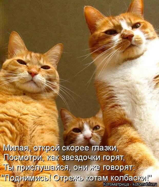 """Котоматрица: Милая, открой скорее глазки, Посмотри, как звездочки горят, Ты прислушайся, они же говорят: """"Поднимись! Отрежь котам колбаски!"""""""