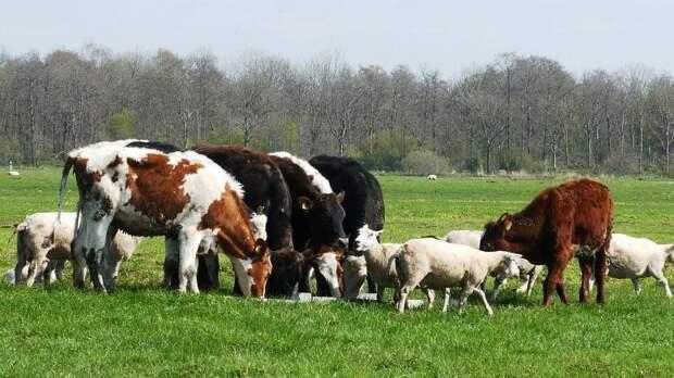 РК и РФ сняли временные ограничения на взаимные поставки животноводческой продукции