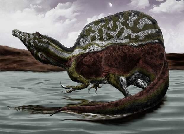 Палеонтологи обнаружили способность крупнейшего хищного динозавра плавать