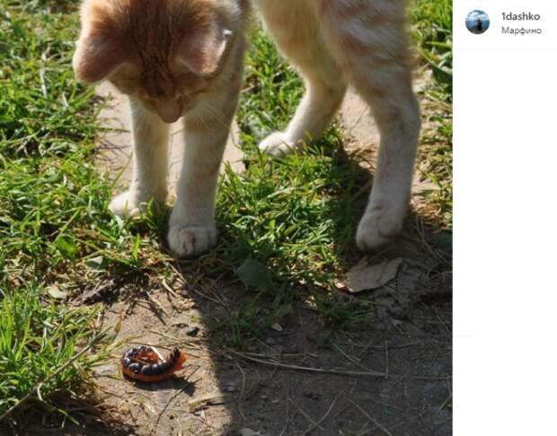 Фото дня: знакомство кота с гусеницей в Марфине