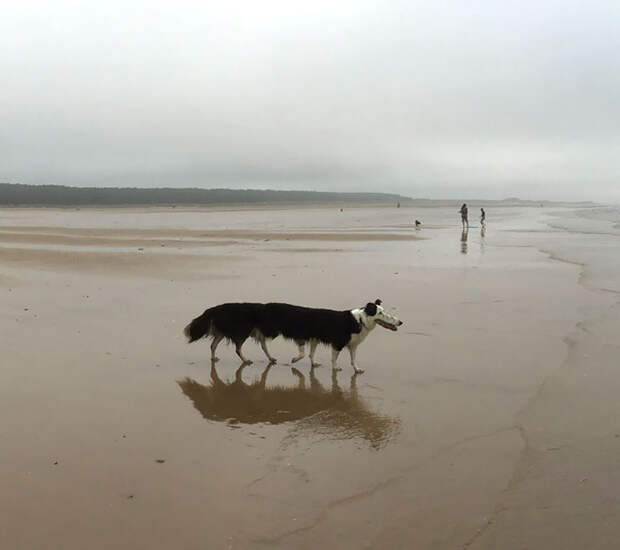 Вот почему не стоит фотографировать животных на панораму: 8 фото