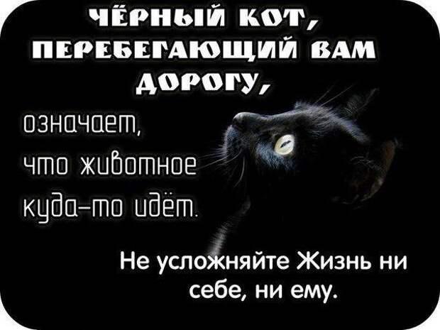 И будет вам счастье! (кошачьи приметы)