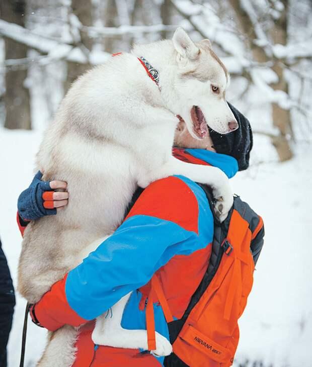 """Порой даже крупные собаки просятся """"на ручки"""" к хозяевам Фото: Дмитрий АХМАДУЛЛИН"""