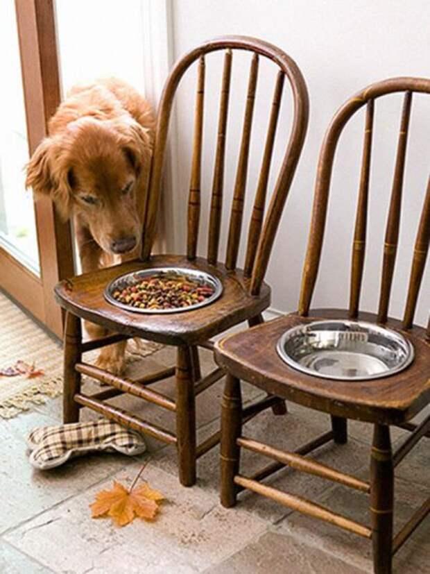 Кормушки для собак из старого стула