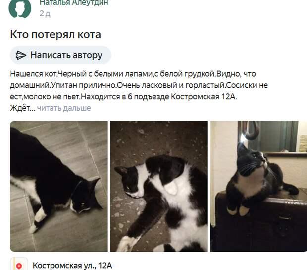 Фото дня: кот-потеряшка ждет хозяина на Костромской
