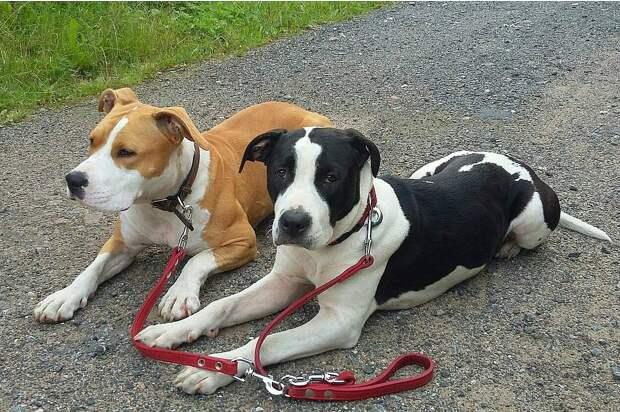 Состояние собак стабильное. Фото: Сообщество «Питер ищет Стешу и Моню» в «ВКонтакте»