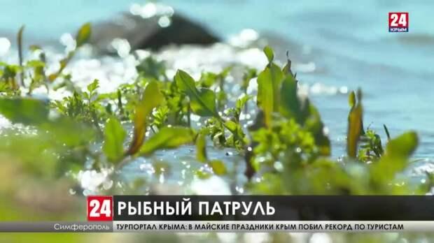 Экологическая акция «Всероссийский день без сетей» стартовала в Крыму