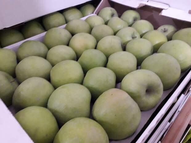 Почти 300 кг санкционных яблок уничтожили в Удмуртии