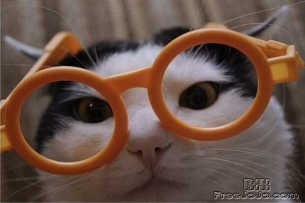 7 интересных фактов о котах