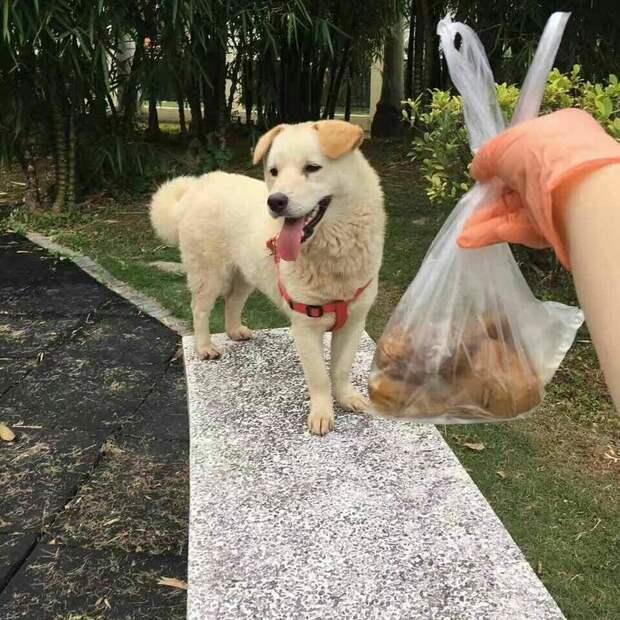 В Китае спасли пёсика, которого продавали на мясо. Спустя месяц на свободе его не узнать! добро, домашние питомцы, живность, животные, песик, собака, спасение