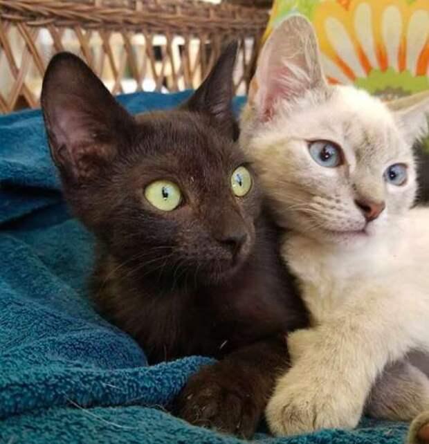 кошки обнимаются
