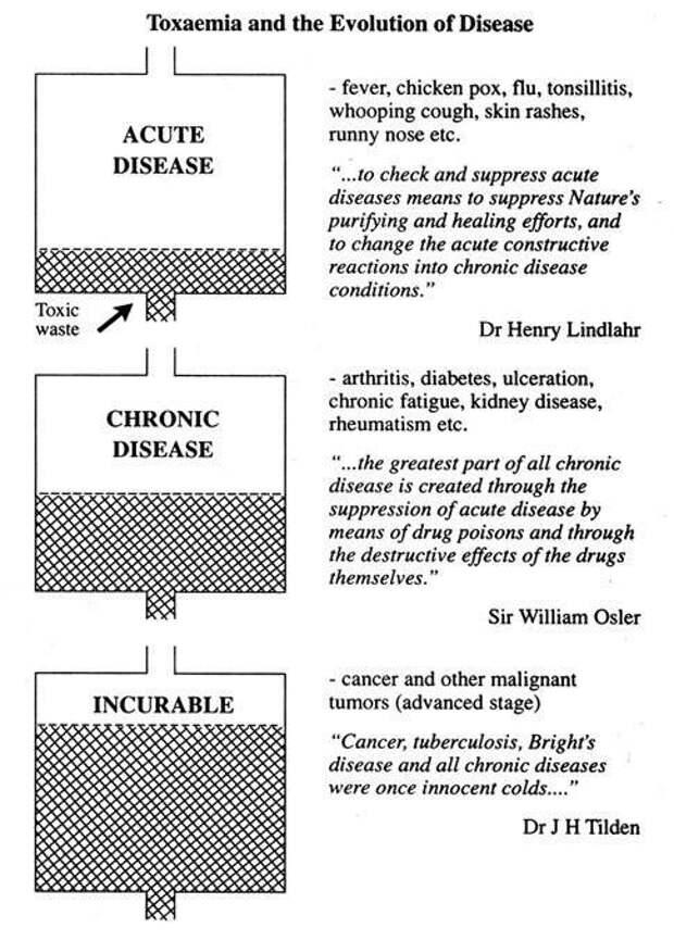 Принципы исцеления организма: мы есть то, что у нас усваивается