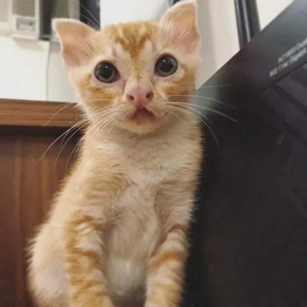 Котенок с редкой и необычной внешностью был найден на улице Гонконга