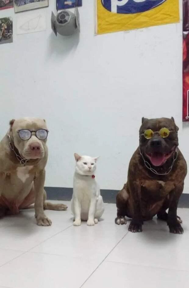Когда тебя с самого детства воспитывали собаки