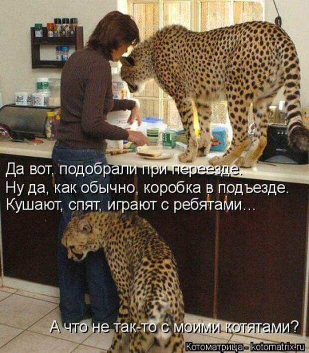 1451492502_kotomatritsa_y