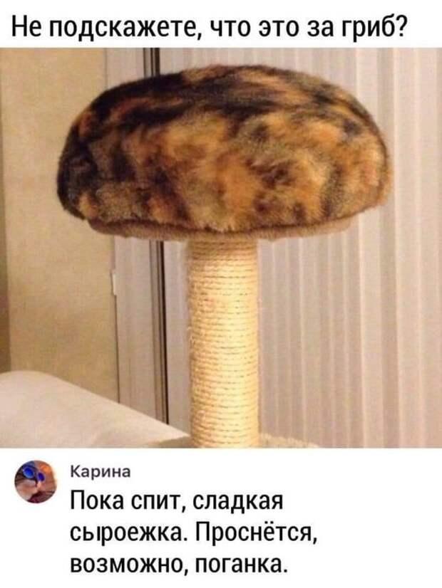 На изображении может находиться: текст «не подскажете, что это за гриб? карина пока спит, сладкая сыроежка. проснётся, возможно, поганка.»