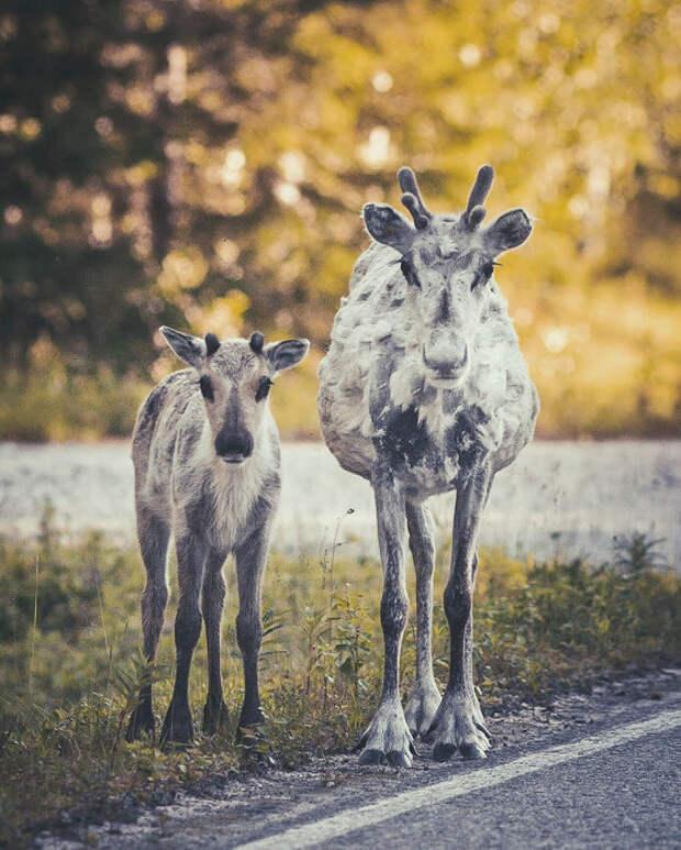 Жители лесных просторов: 15 запредельно нежных и чувственных фотографий животных с близкого расстояния