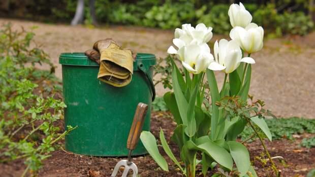 Новые законы о садоводствах, дорогах и лесах обсудят в медиацентре «Патриот»