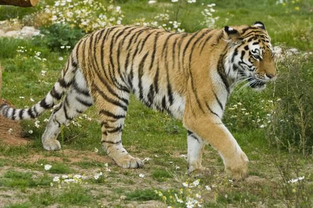 Никто не указ: посетители зоопарка Удмуртии пытались накормить тигров селедкой, а моржей - булками