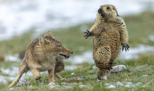 Лучшие фотографии дикой природы в мире